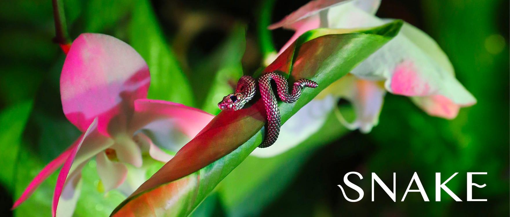 snake_header_desk